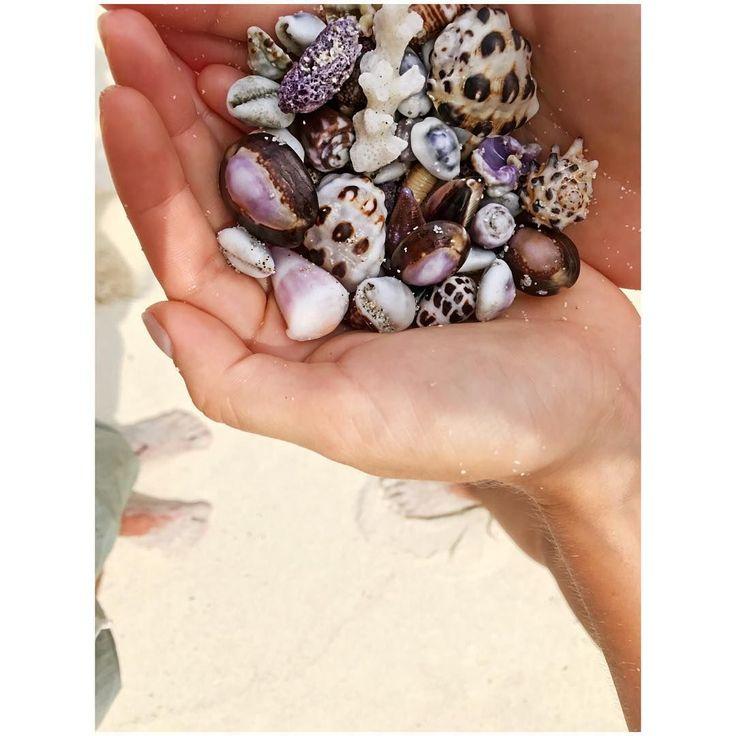 📷 @giulia_donnin #regram 🐚🐚🐚   #shells #sand #lombokfriendly #bestintravel #underthesun #gilibible #giliasahan #secretgilis #traveladdict #lombokguide #beachlover #seetheworld #passportready #traveller #lombokexperience #beachlife #paradisebeach #summertime #beachtime #giliasahanecolodge #lombok #exploreindonesia #travellife #precious #beauty #nature_perfection #happy #beachday #beachtime