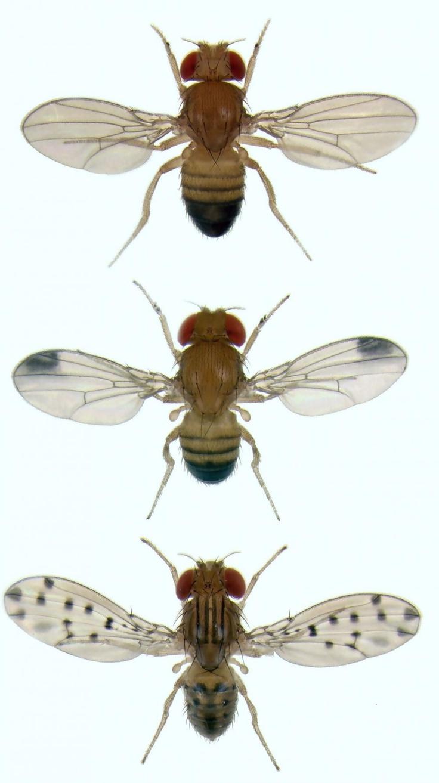 The best images about miscellaneous on pinterest fruit flies