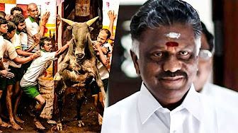 Breaking News: Jallikattu dates have been announced by the Jallikattu committee. Will CM OPS attend Jallikattu this time?. After the orginance has been signed by the President of India last week Jallikattu will take place in February.