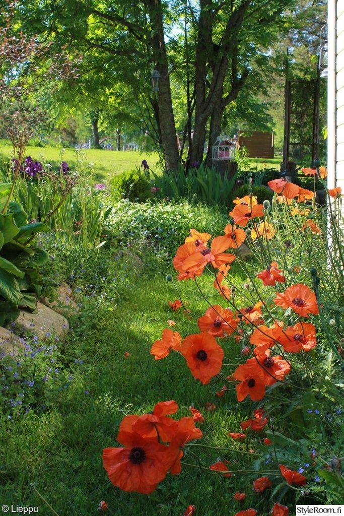 piha,kukat,unikot,kesä,viherpiha,kuukauden piha