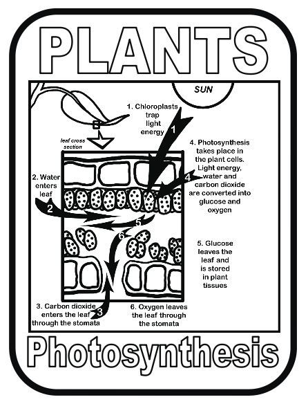 130 best images about animal and plant cells on pinterest