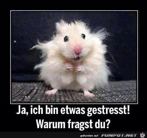 lustiges Bild 'Gestresst.png'- Eine von 21100 Dateien in der Kategorie 'witzige Bilder' auf FUNPOT.