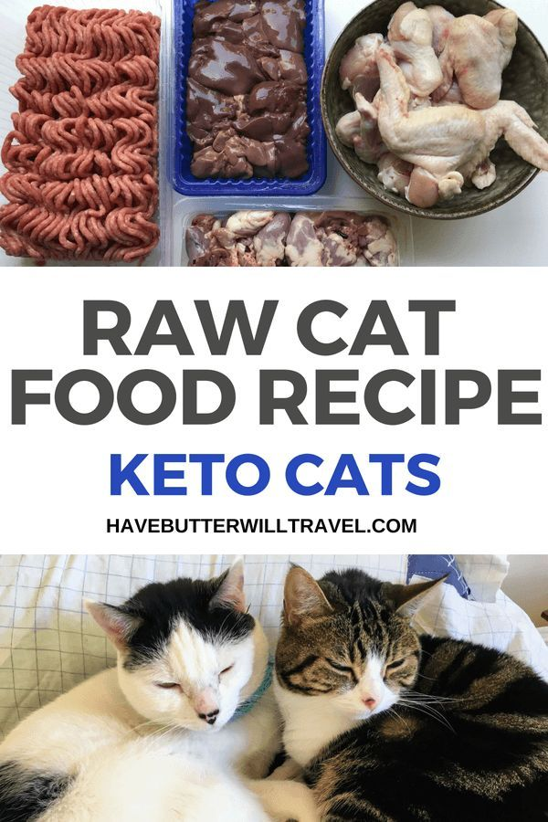real food diet for cat