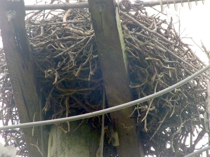 how to build a eagles nest !!