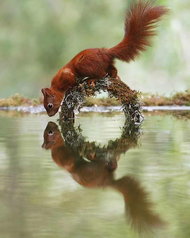 Julian Rad fabulous, adorable and funny squirrel and hamster pictures