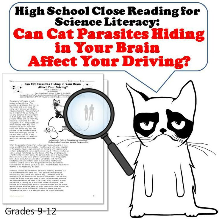 Can Toxoplasma, a parasite that primarily lives in cats, affect our brains? Students