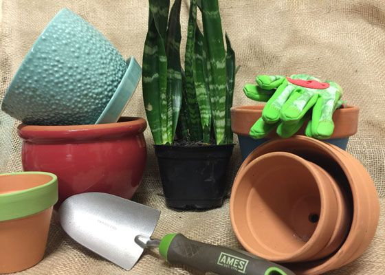 home depots garden club repot your tired and saggy houseplants and watch them sprout new growth find out - Home Gardening Club