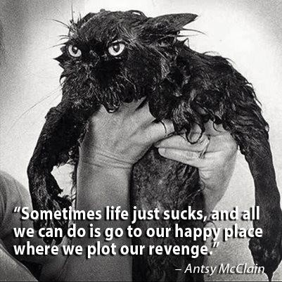 PlottingPlot Revenge, Cat, Laugh, Quotes, Dresses, Happy Places, So True, Funny Animal, Wet Kitty