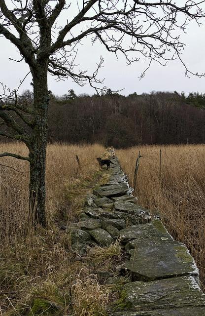 Stone path by PeterN  via Flickr
