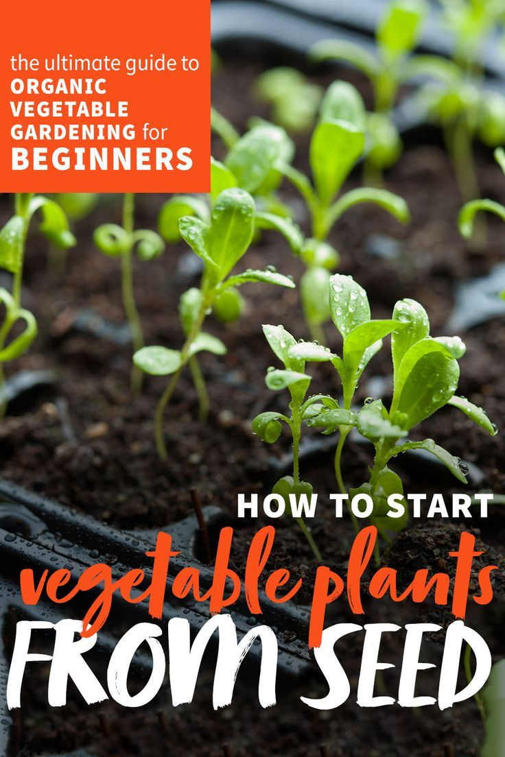 How To Plant Seeds Organic Vegetable Gardening In 2020 With