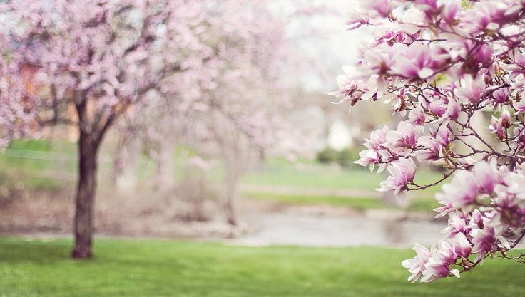 5 Reasons We're Excited for Spring! We can't wait for Spring to fully arrive.  Why are you most excited?