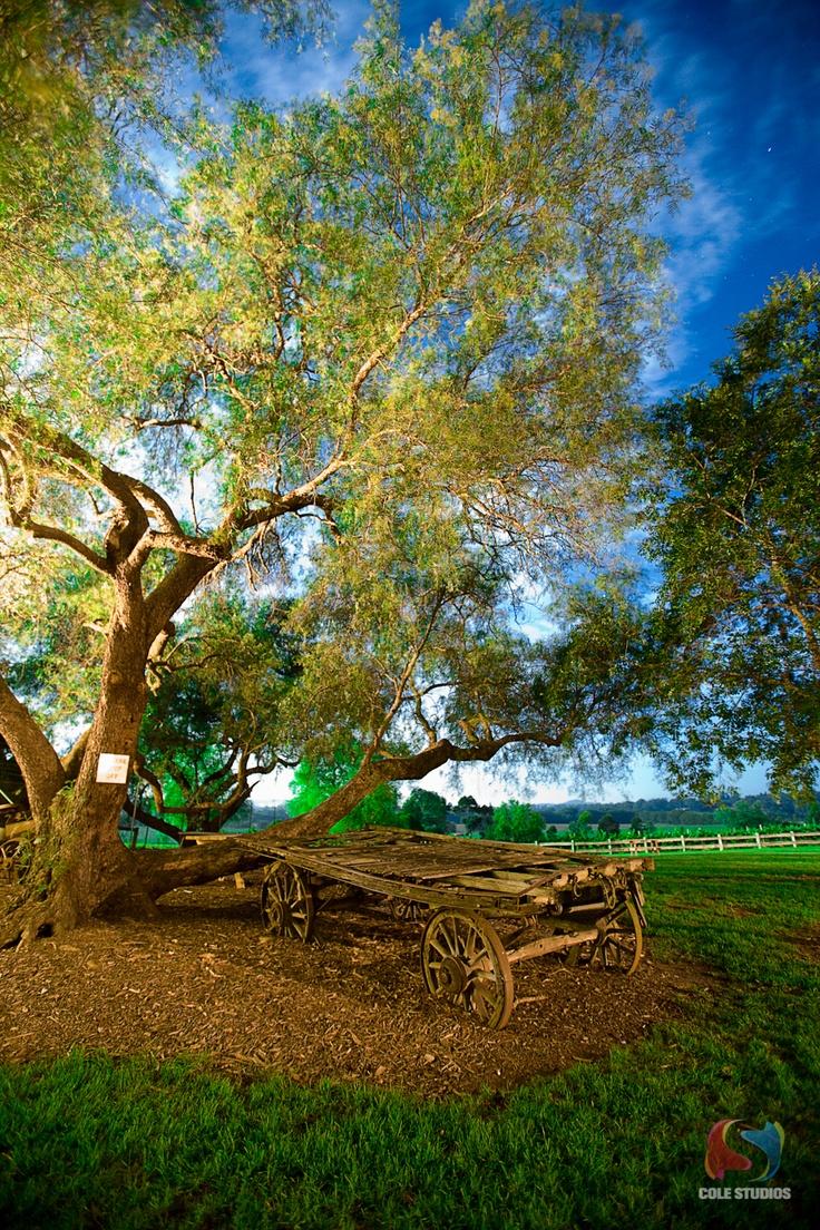 Belgenny Farm -near Camden in NSW.