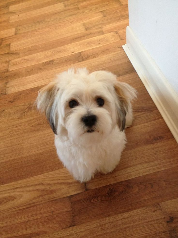 KYI LEO PROVEN STUD | Epping, Essex | Pets4Homes