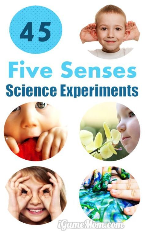 45 science activities for kids to learn the 5 senses - School Pictures For Kids