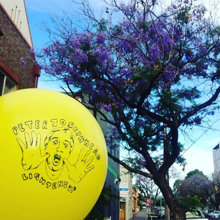 Nobody told me that Adelaide is the Jacaranda capital of the world. Bewtiful maate. Playing tonight at the Crown & Sceptre at 10pm. #jacaranda #adelaide #crownandsceptre