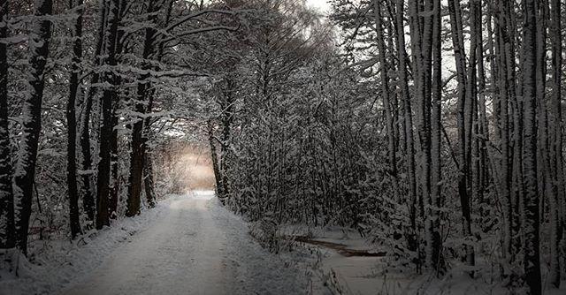 It caught me off guard.... #kvicksund #path #life #photowalk #winterwonderland