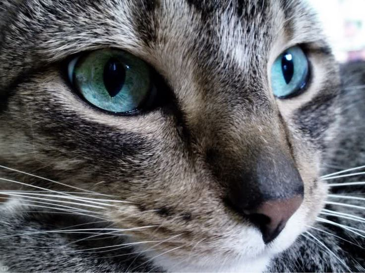 картинки котов: 27 тыс изображений найдено в Яндекс.Картинках