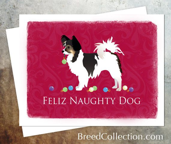Long Haired Chihuahua Tri-Color / Papillon Dog by TriPodDog