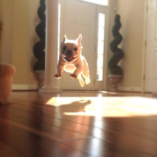 21 Magical Baby Animals Caught Mid-Flight