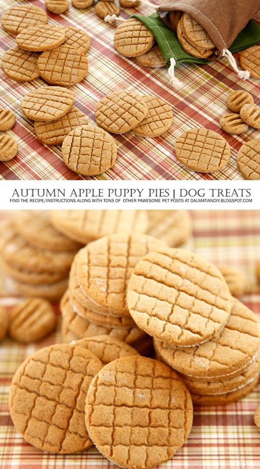 {RECIPE} Autumn Apple Puppy Pies | Dog Treats