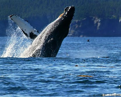 *Whale watching on the coast of Oregon.