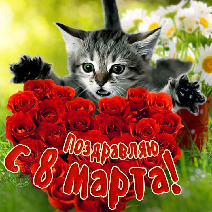 8 марта открытки коты