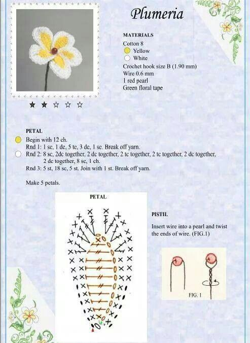 Plumeria , Frangipani Flower