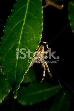 Spider standing still on a leaf in the forest Royalty Free Stock Photo