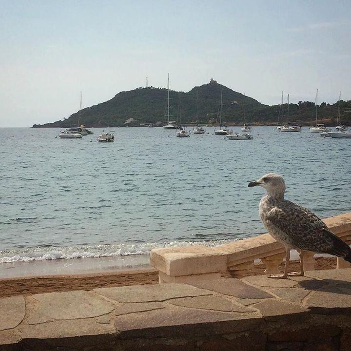 La contemplation c'est bon #goeland #baie #plage #sable #gull #bay #beach #sand #agay #dramont #var #provence #cotedazur #france #automne #septembre #oiseau #oiseaux #bird #birds #mowe #gabbiano http://ift.tt/2y2c9hi