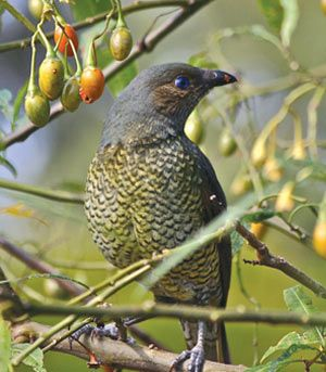 Native+Birds | Australian Native Garden Design Ideas to Attract Garden Birds