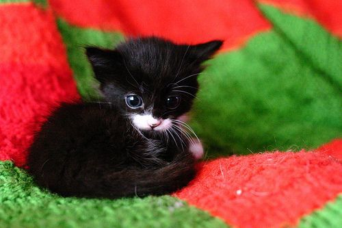 Tiny kitty! This one's fur markings make it look like it's wearing a monocle. Too cute! :D