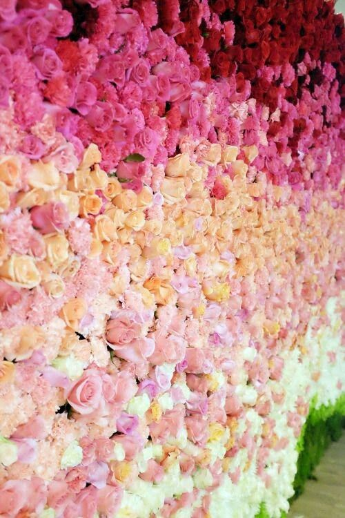 24 best Floral Wall Backdrop images on Pinterest | Flower wall ...