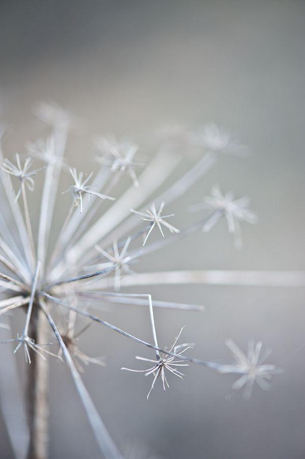 Grey Botanical by Galina Kochergina
