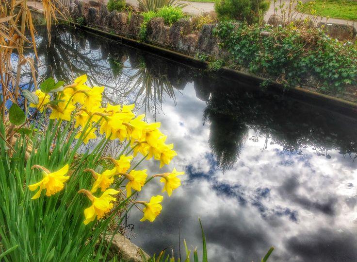 Spring in Victoria Park, Paignton (2)
