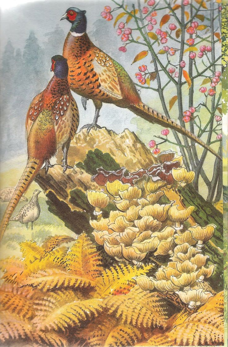 74 best pheasant images on pinterest pheasant bird art and glass