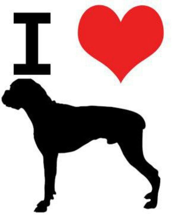 boxer love
