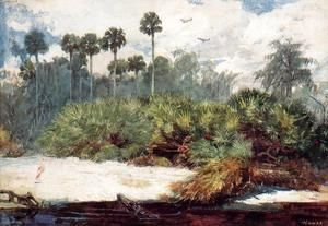 In a Florida Jungle  Winslow Homer