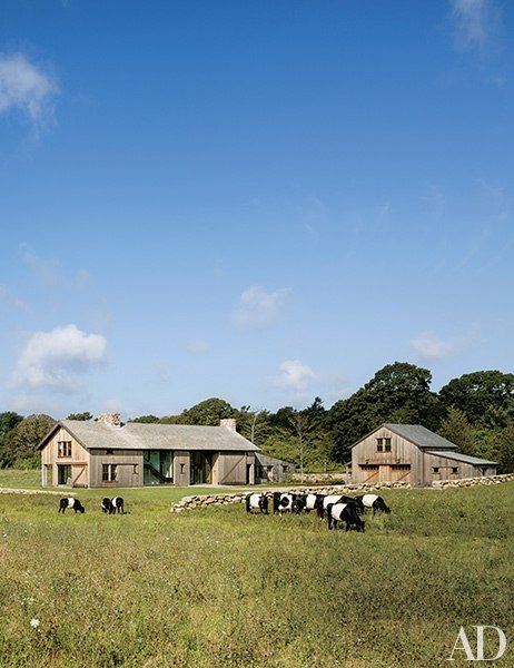 Cattle graze outside the home of Molly and Eric Glasgow at the Grey Barn and Farm in Martha's Vineyard, Massachusetts. Local firm Hutker Architects created the main house (left), which was designed to look like a repurposed barn, as well as several outbuildings