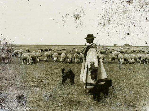 Hortobágyi juhnyáj és az elmaradhatatlan pásztorkutyák (1908)