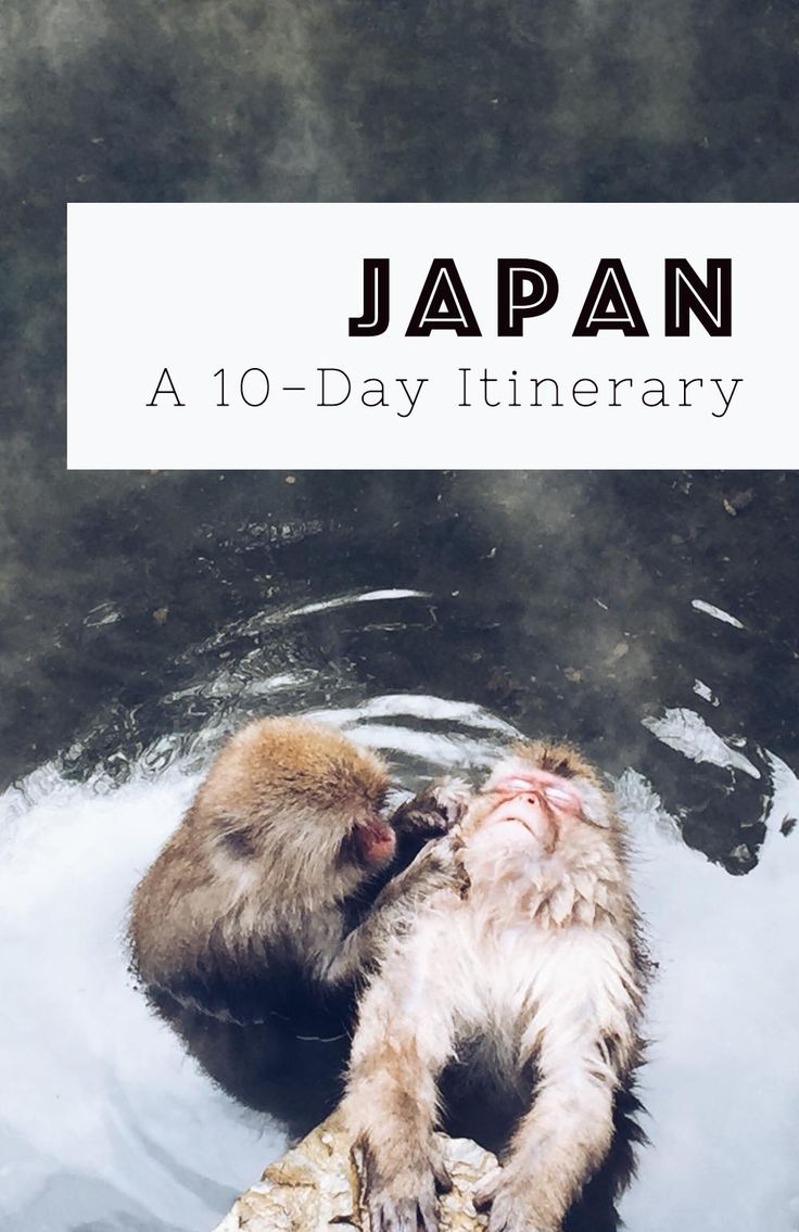 How to get the most out of 10 days in Japan – a full itinerary including things to do, places to stay, and vegetarian-friendly restaurant