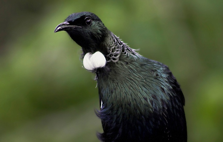 Tui Checking out the Photographer