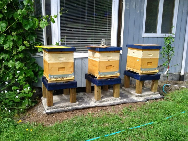 Early spring hives