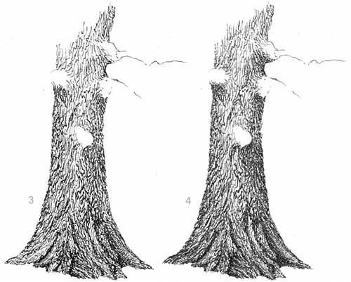 oak tree drawing oak trees how to draw an oak