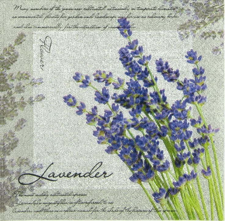 306 best images about levander on Pinterest | Decoupage ...