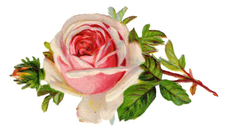 Free Vintage Rose Clip Art.  Lots of other lovely free printables, too.