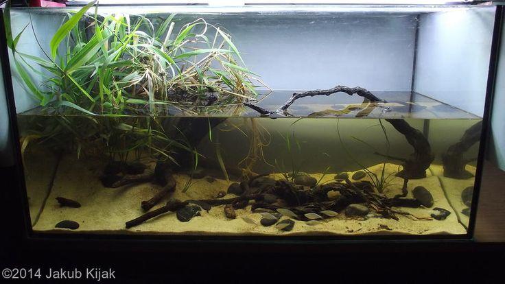 aquarium design aquascaping however biotope aquariums papua neuguinea ...