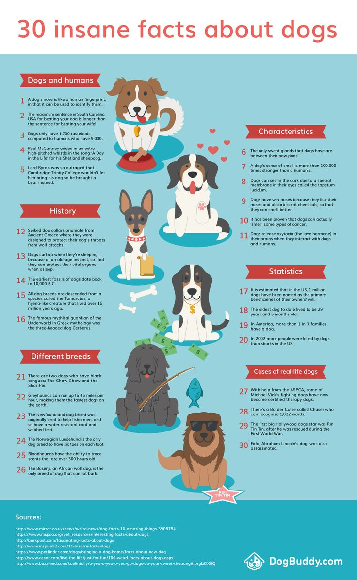 Did you know that dogs have over 5 times more tastebuds than human beings? Now you do! Here's an infographic with 30 fun facts about dogs from DogBuddy.com.