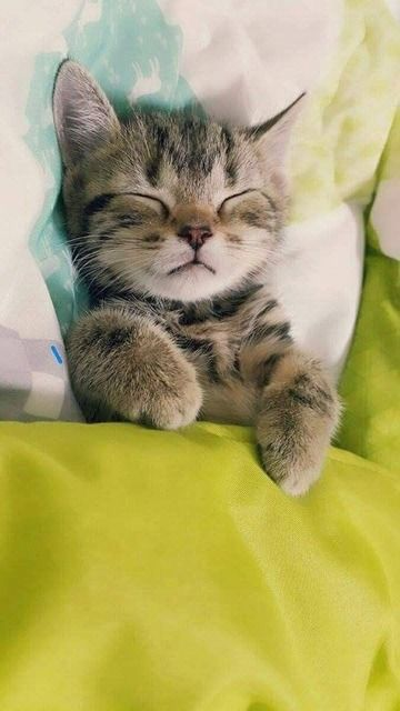 Very precious sleeping kitten! Cute tucked in bed!                                                                                                                                                                                 Más