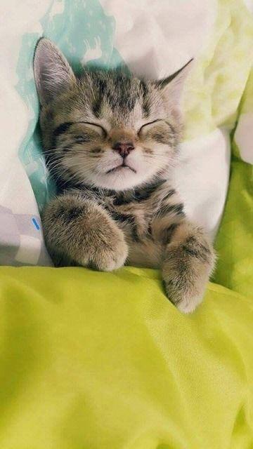 Very precious sleeping kitten! Cute tucked in bed!                                                                                                                                                                                 Más
