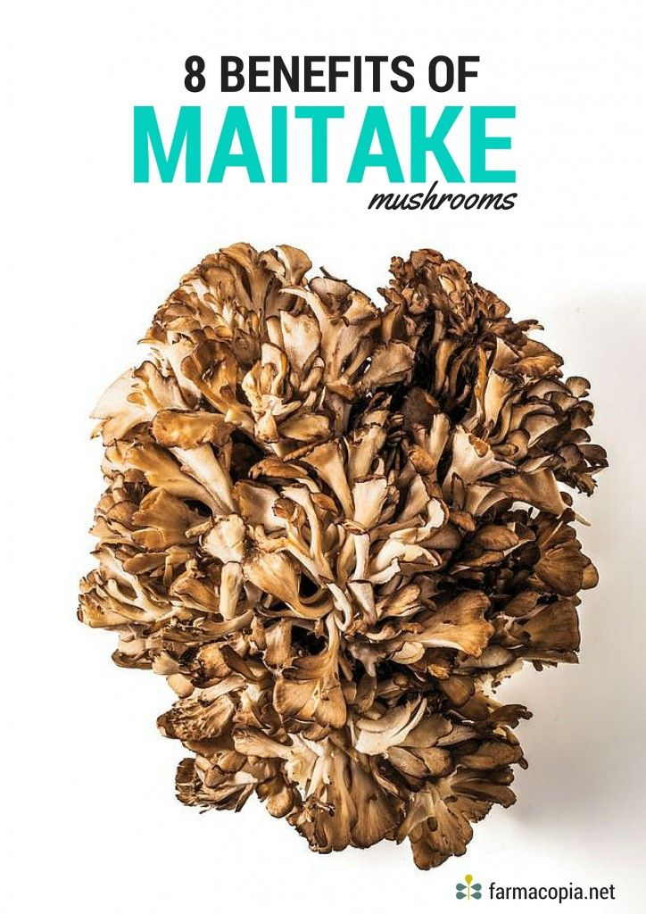 Farmacopia - 8 Benefits of Maitake Mushrooms
